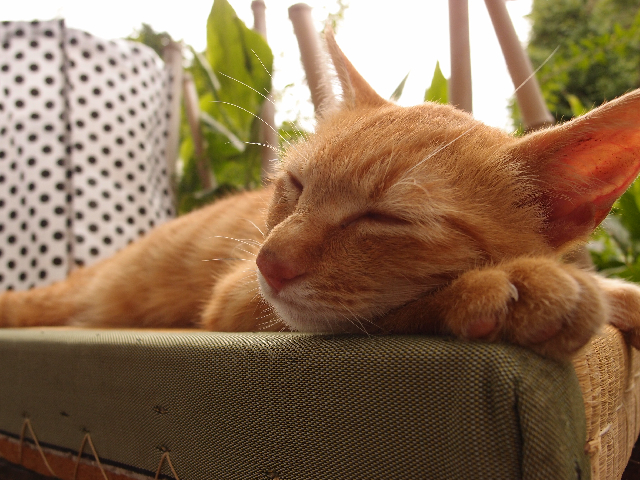 川越 猫屋敷 寝子2