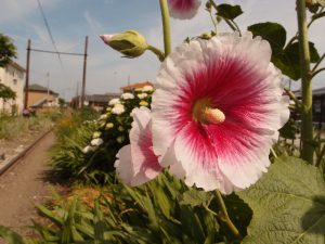 初夏っぽい花