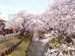 観光に最適!東武東上線 川越特急&池袋・川越アートトレインとは