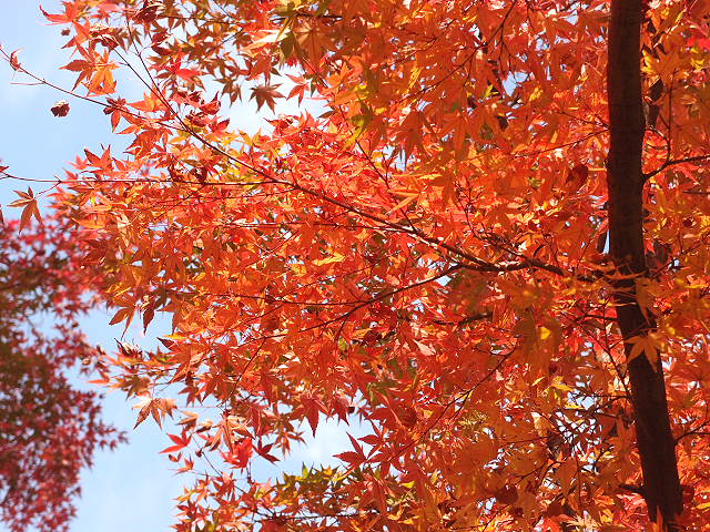 川越で紅葉スポットめぐり|見頃は11月中旬!紅葉狩り写真まとめ