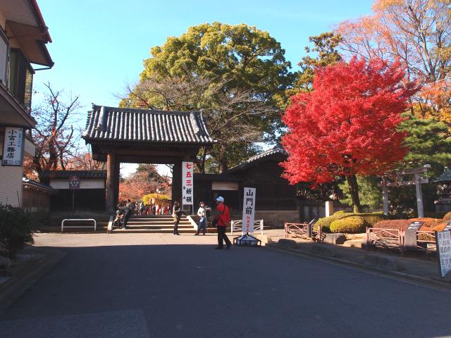 迫力満点!喜多院小江戸川越菊まつり 400以上の作品が並ぶ菊花展