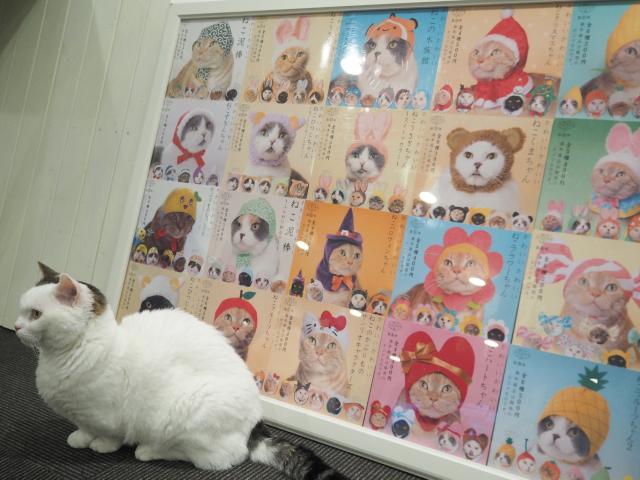 猫カフェ×ネカフェ「猫家 川越店」が天国すぎる!Wi-Fi利用もOK