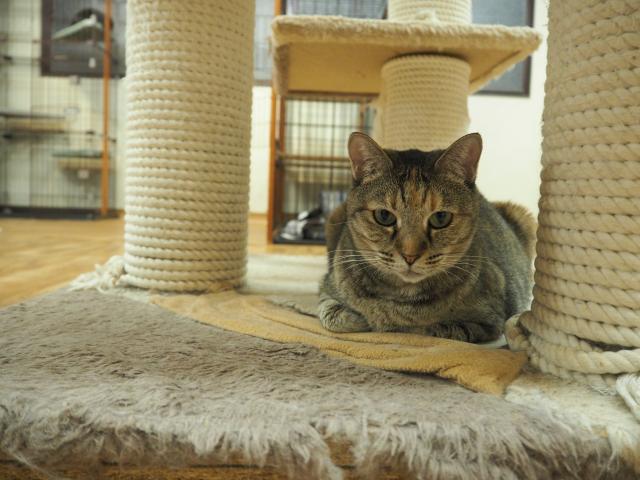 川越「保護猫カフェ ねこかつ」は猫オアシス!新しい家族と出会おう