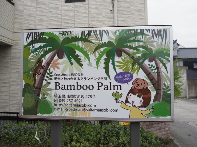川越・Bamboo Palm(バンブーパーム)で動物とふれあいタイム|時の鐘すぐそば