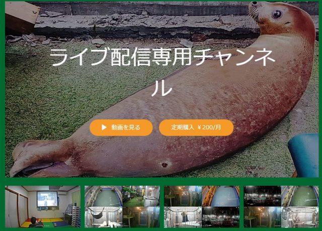 川越・Bamboo Palm(バンブーパーム)で動物とふれあい&バーベキュー!